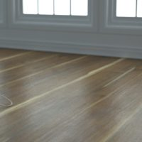 Olive Wood (0080) – Dusk